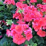 Plants-sm